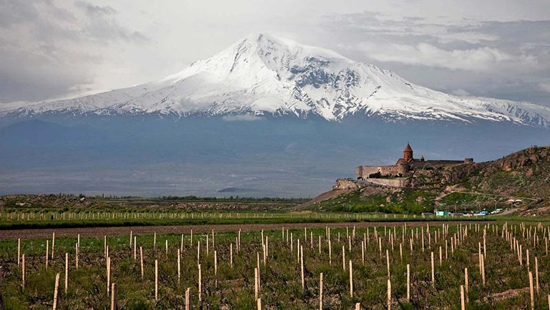 Виноградники Армении